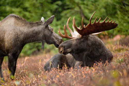 US Fish & Wildlife Service/Flickr