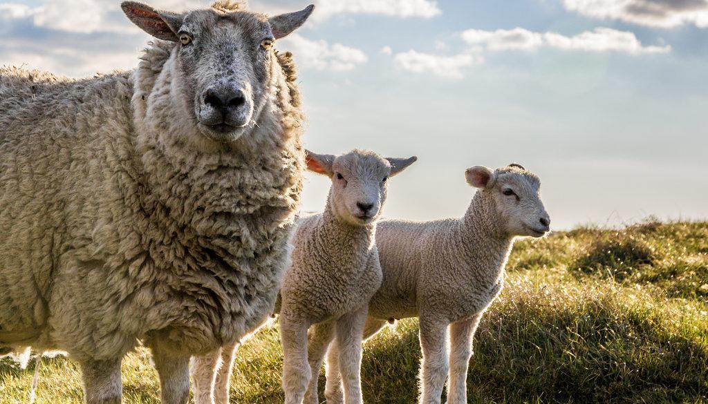 15 Underappreciated Kosher Animals