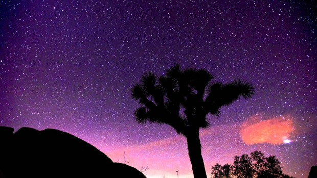 joshua-tree-nightfall