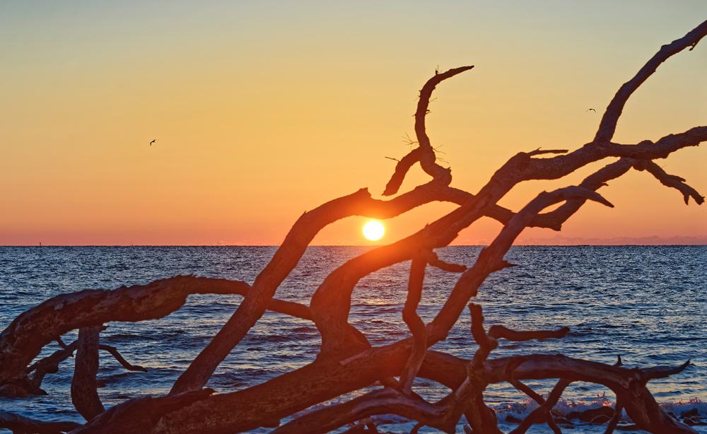 Sun on horizon seen through tree branches