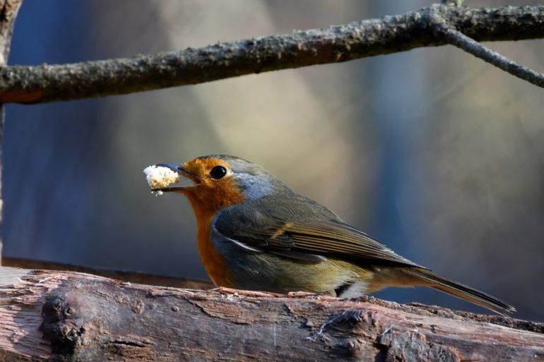 crumbs bird Hevria Emily Zimmer